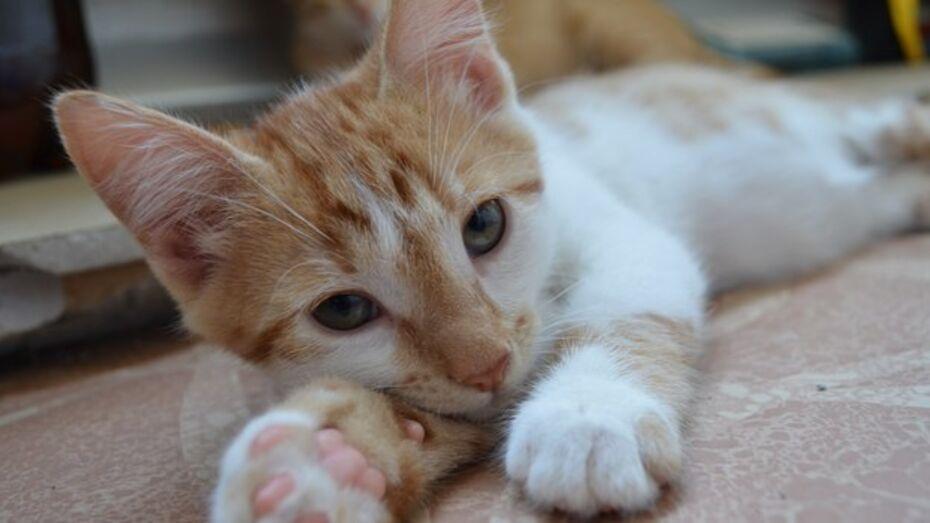 Воронежские спасатели вызволили застрявшую в вентиляционной шахте кошку