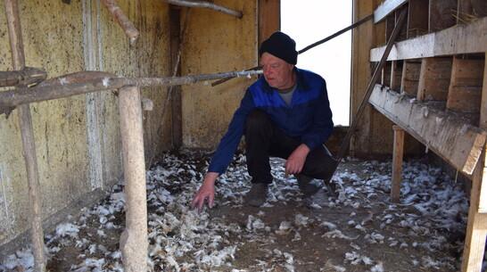 Неизвестный зверь уничтожил домашнюю птицу и кроликов на подворье в Воронежской области