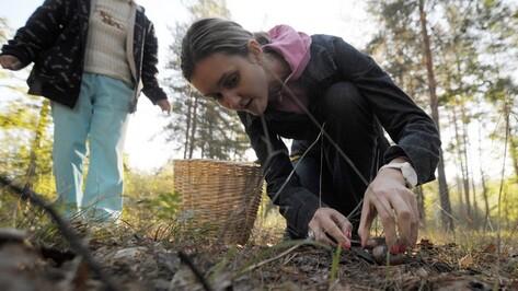 Воронежские грибники в поисках «нехоженых» полян пролезают на режимные территории
