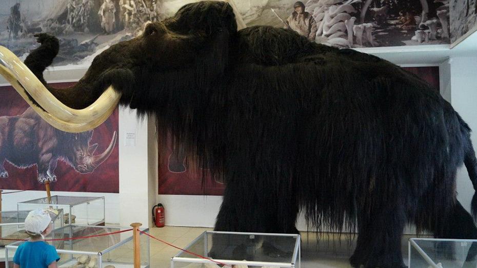 Уголовное дело о растрате в воронежском музее «Костенки» закрыли