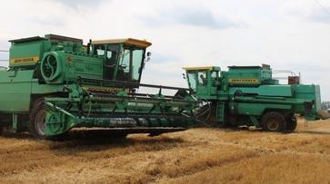 В Воронежской области собрали первый миллион тонн зерна