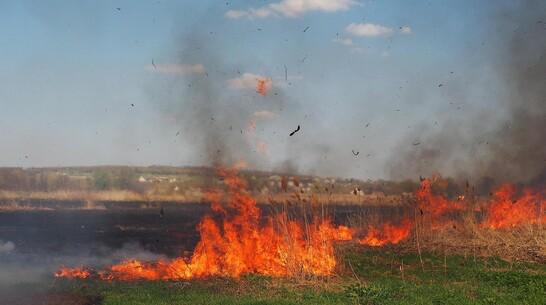 В Бутурлиновке выгорело 10 га камыша на лугу