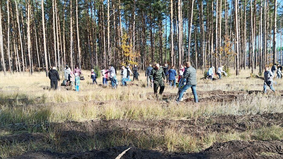 Лискинцев позвали высадить 400 тыс сосен и акаций