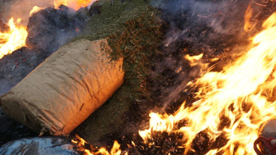 В Воронеже сожгли более 60 кг наркотиков