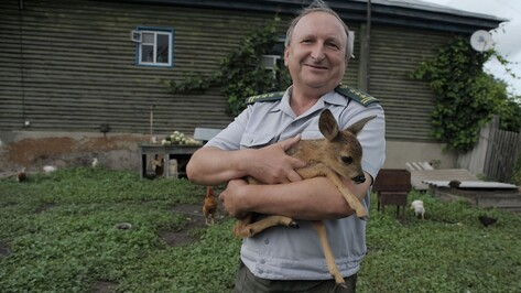 Начальник охраны заповедника в Воронежской области приютил олененка-сироту