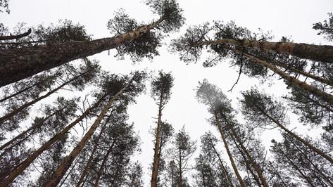 В Северном лесу в Воронеже вырубят почти 5 тыс деревьев