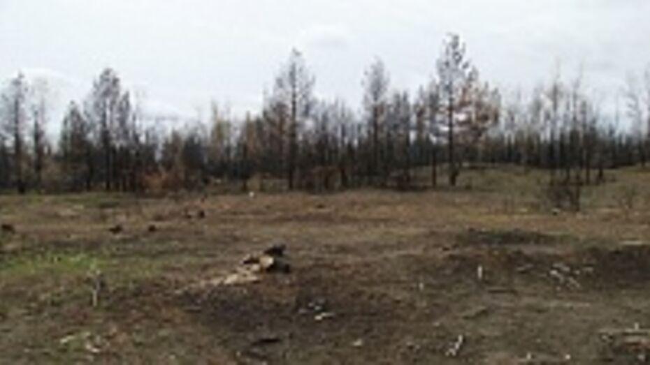 За год в Воронежской области расчищено горельников на треть больше запланированного