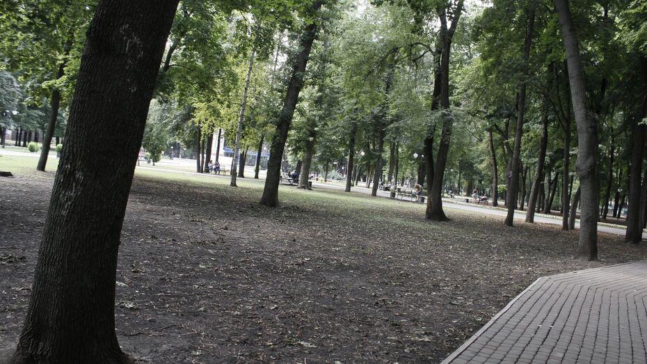 В Воронеже из-за нашествия вредителя массово погибли ясени
