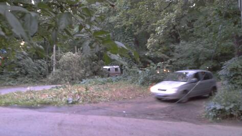 В Воронеже упавшее дерево спровоцировало масштабную пробку