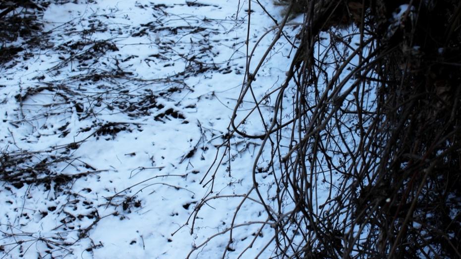 В ночь на понедельник в Таловском районе выпал снег