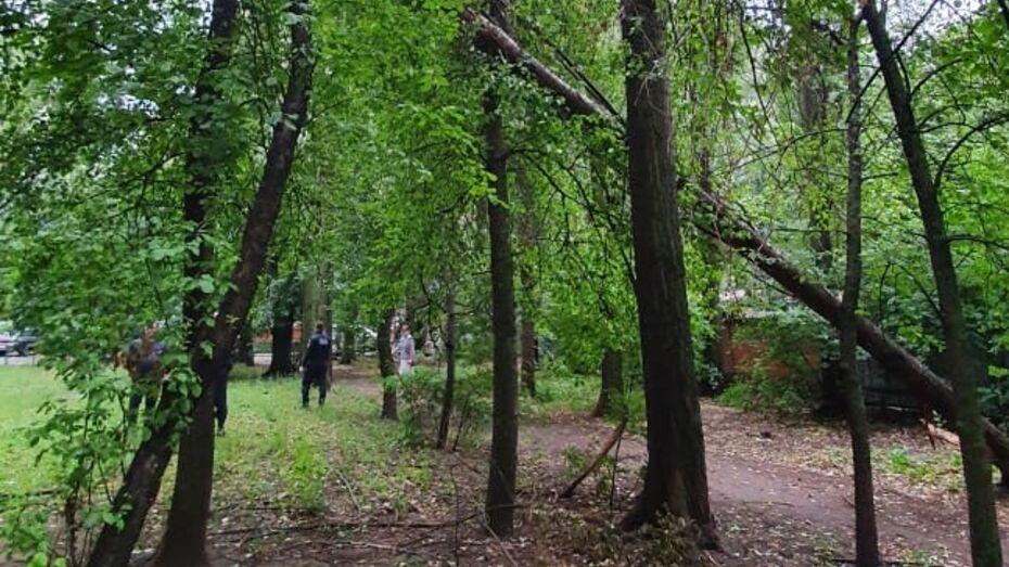 Сильный ветер сломал в Воронеже 8 аварийных деревьев