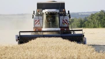 Воронежские аграрии намолотили второй миллион тонн зерна