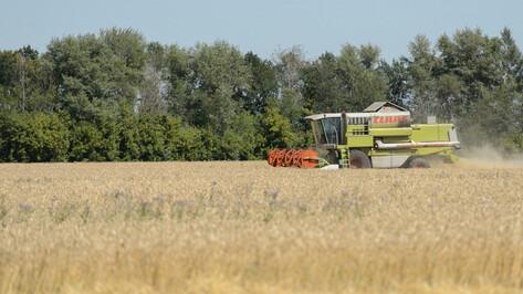 Первые лица Воронежской области поздравили работников сельского хозяйства