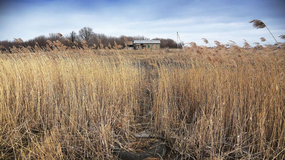 Воронежцам объяснили, куда сообщать о скоплении сухой травы на общественных территориях