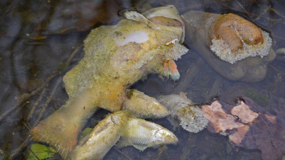 В сельском пруду под Калачом Воронежской области массово погибла рыба