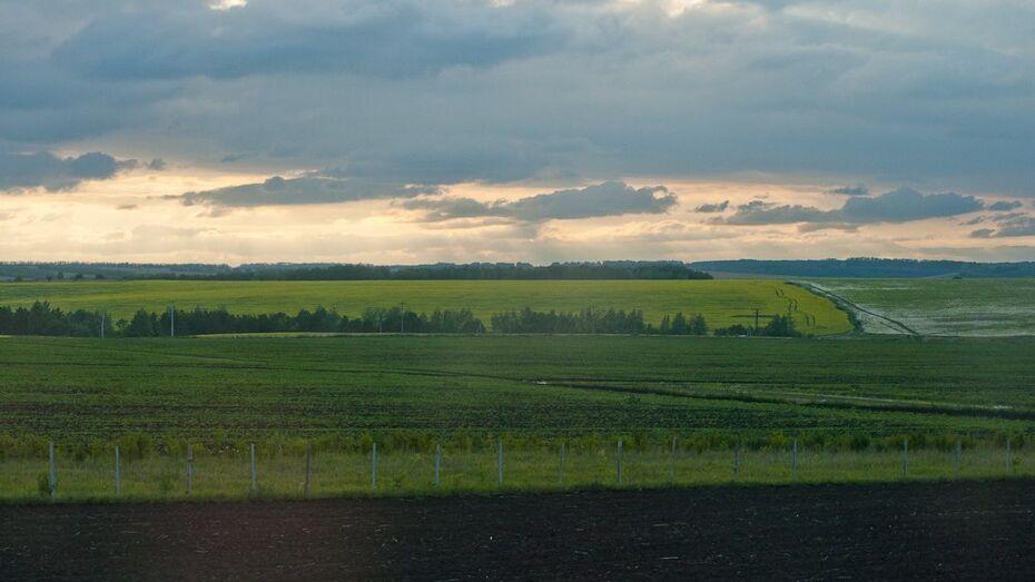 Воронежские аграрии получат более 188 млн рублей на страхование растений