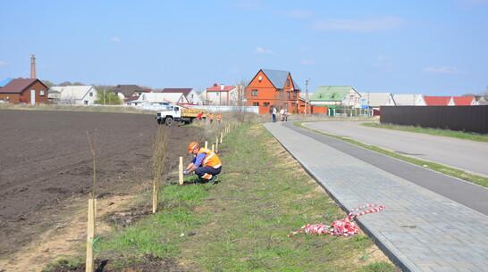 В микрорайоне Павловска появятся 560 тополей и акаций