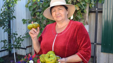 Момордика и томат-кольцо. Что вырастили воронежские огородники в 2020 году