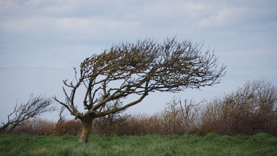 МЧС предупредило воронежцев о сильном ветре с порывами до 20 м/сек