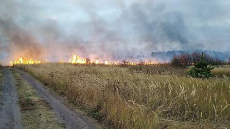 В Воронежской области осталось 2 крупных природных пожара