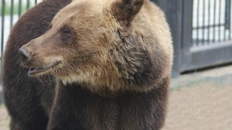 Под Воронежем медведь растерзал 86-летнего пенсионера