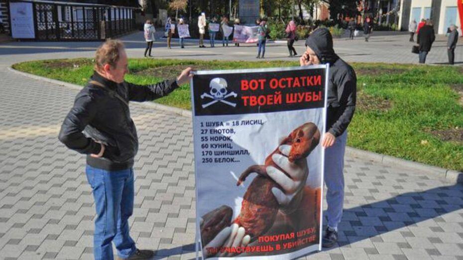 Воронежские зоозащитники отказались от ежегодного антимехового марша