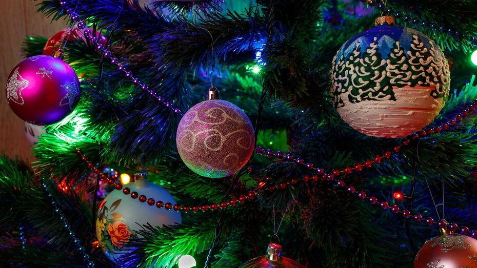 Воронежцам объяснили, как выбрать хорошую новогоднюю елку