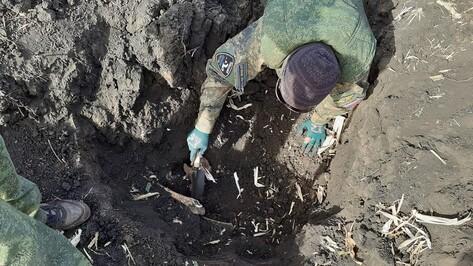 Останки итальянского и 10 советских солдат нашли в Верхнемамонском районе