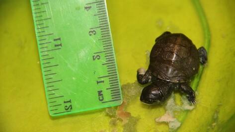Новоусманский театр зверей объявил о поиске зоолога для детеныша черепахи
