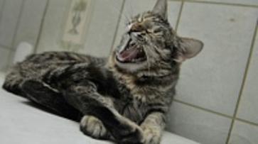 В Воронежской области заболеваемость бешенством кошек и собак за год снизилась в пять раз