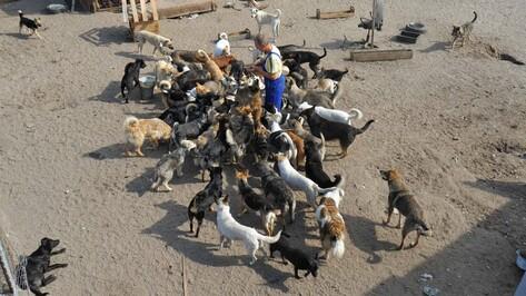 Директор воронежского приюта «Дора» выпустит на улицу 150 собак