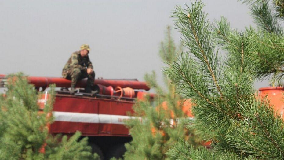 Высокий класс пожароопасности установился в 5 районах Воронежской области