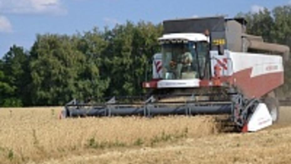 Грибановцы собрали более 102 тысяч тонн зерна