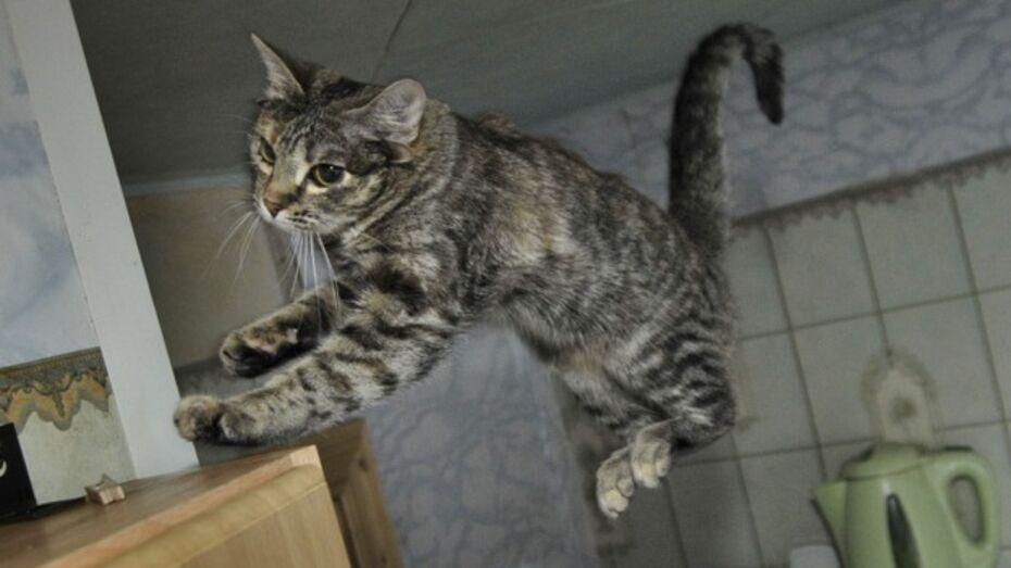 В Подгоренском районе кот спас хозяина от самоубийства