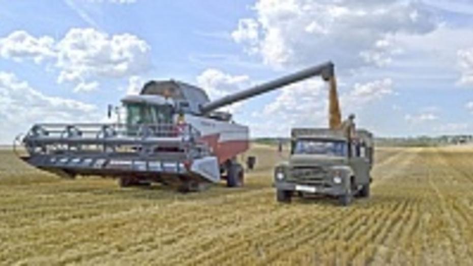 В Бутурлиновском районе аграрии собрали пшеницы больше, чем прогнозировали