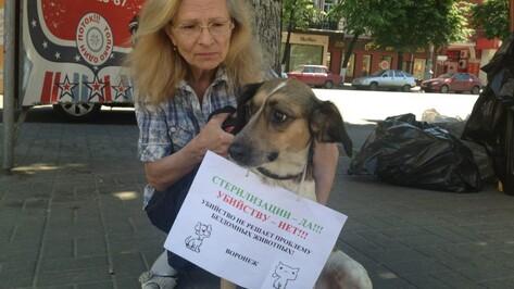Воронежские зоозащитники взяли в автопробег дворняжку и хаски