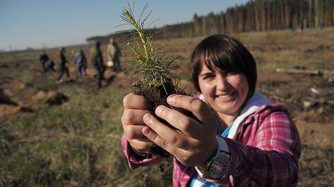В Воронеже в рамках «Единого дня посадки деревьев» высажено более 100 тысяч сеянцев сосны и березы
