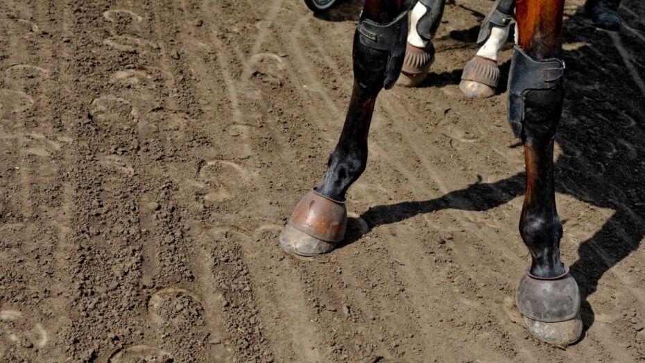 В Воронежской области двое парней скрылись с ограбленной сельхозфермы на лошади