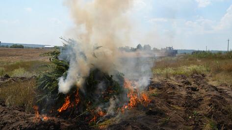 Воронежские наркополицейские за полгода сожгли более 41 т конопли и мака