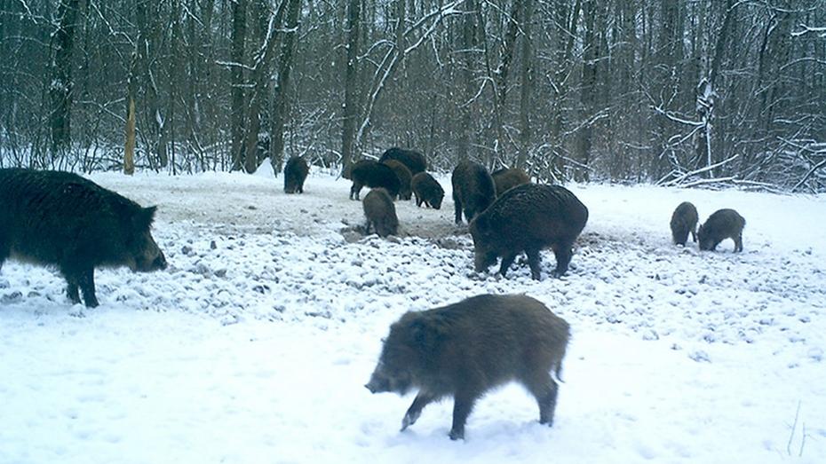 В Воронежском заповеднике животные получили 11 подкормочных площадок