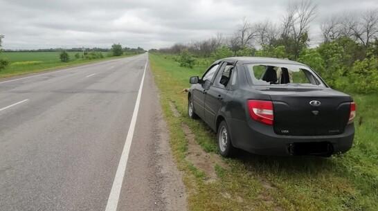 Косуля насквозь пробила стекло «Лады Гранты» на трассе в Воронежской области