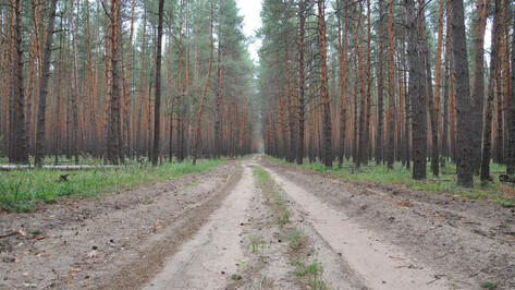 Губернатор попросил ускорить оформление земель для зеленого пояса Воронежа