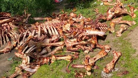 Груду костей животных обнаружила жительница Воронежа в Подгорном