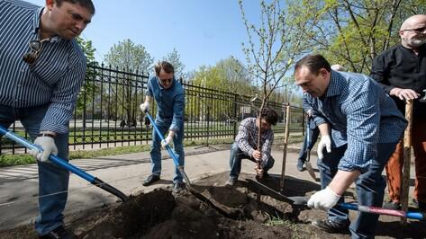 В Воронеже у института искусств высадили вишневую аллею