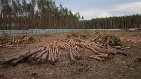 Полицейские расскажут воронежцам о незаконной вырубке деревьев