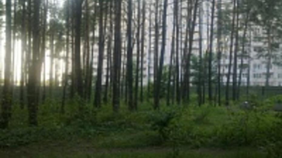 Воронежцы превратят замусоренную лесополосу в парк