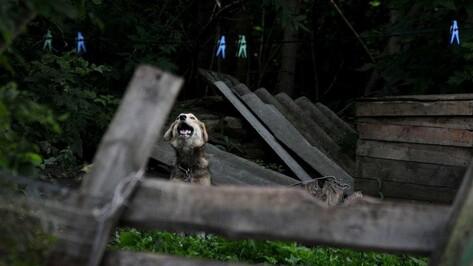 Мэрия Воронежа нашла место для собачьего приюта рядом с очистными сооружениями