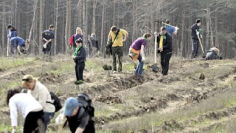 В регионе для восстановления лесов расчищено 50 процентов горельников