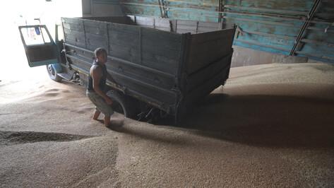 Ради лечения больной раком жены житель Воронежской области украл 24 т семян сои