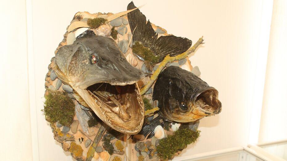 Рыбак из Хохольского района изготовил чучела-картины из щук и сазанов